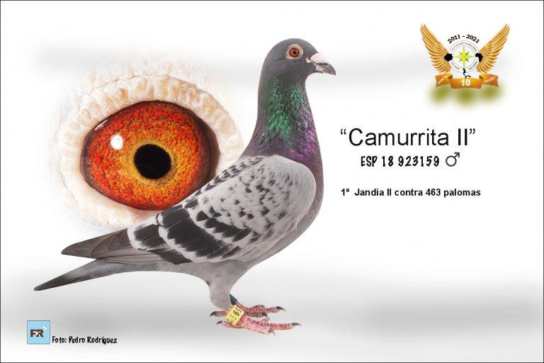 Punta Jandia II - Manuel Cabrera